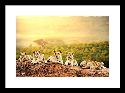 Predatory Photographs Framed Prints