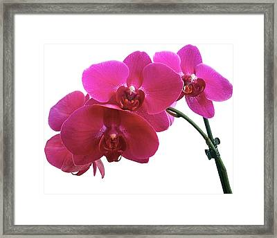 Close-up Of Purple Orchid Against White Framed Print by Andrew Coulter / Eyeem