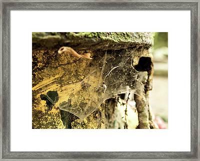Cobweb Framed Print