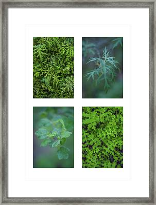 Collage - Sensitive To Green Framed Print by Alexander Kunz