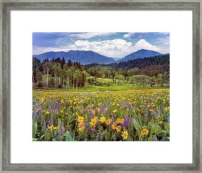 Color Of Spring Framed Print