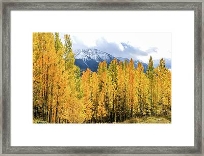 Colorado Aspens And Mountains 1 Framed Print