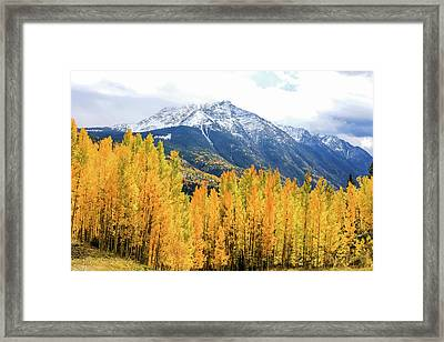 Colorado Aspens And Mountains 2 Framed Print