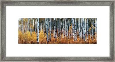 Colorado Autumn Wonder Panorama Framed Print