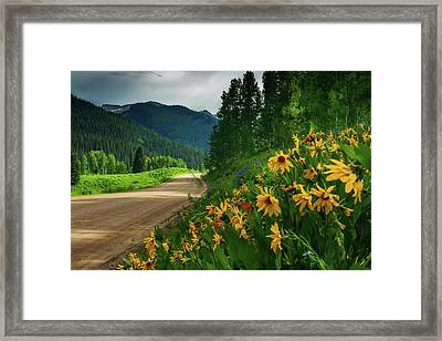 Colorado Wildflowers Framed Print