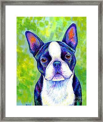 Colorful Boston Terrier Dog Framed Print