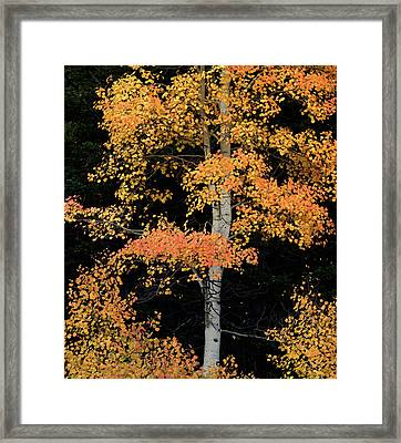 Colorful Contrast Framed Print by Leland D Howard