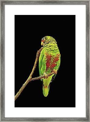 Colorful Parrot Framed Print