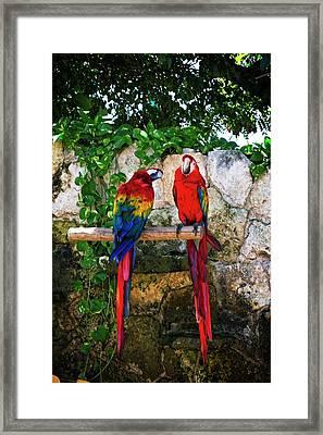 Colorful Parrots Framed Print