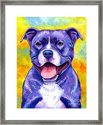 Colorful Pitbull Terrier Dog Framed Print