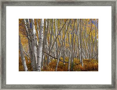 Framed Print featuring the photograph Colorful Stick Forest by James BO Insogna