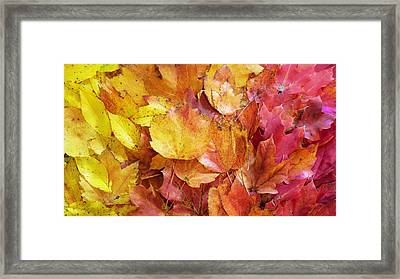 Colors Of Fall - Yellow To Red Framed Print