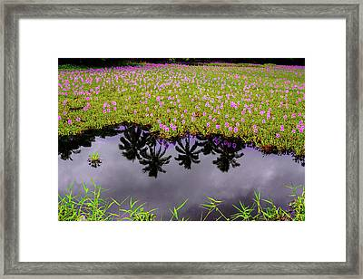 Colors On The Water Framed Print