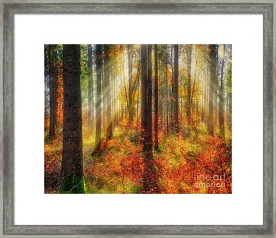 Colours Of Nature 02 Framed Print