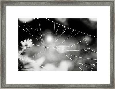 Framed Print featuring the photograph Connected by Sue Collura