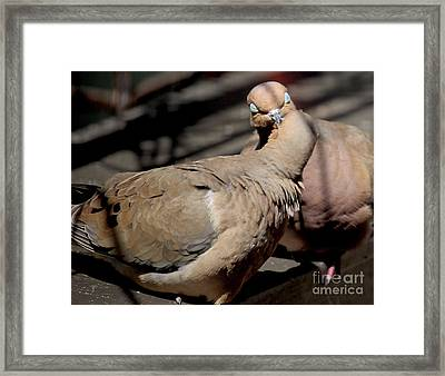 Framed Print featuring the photograph Cooing Mourning Doves 1 by Patricia Youngquist