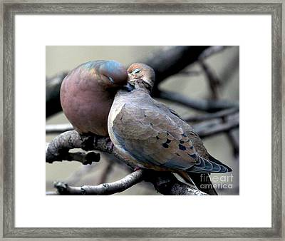 Framed Print featuring the photograph Cooing Mourning Doves 2 by Patricia Youngquist