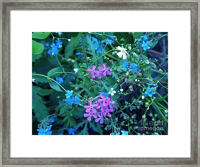 Framed Print featuring the photograph Cool Bouquet by Rosanne Licciardi