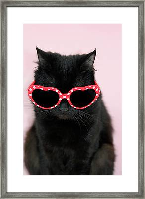 Cool Cat Wearing Sunglasses Framed Print by Kelly Bowden