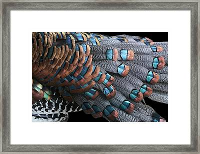 Framed Print featuring the photograph Copper-tipped Ocellated Turkey Feathers Photograph by Debi Dalio