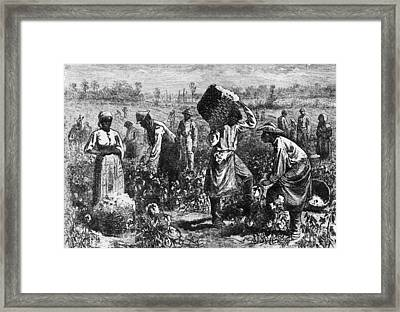 Cotton Slaves Framed Print by Hulton Archive