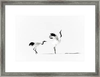 Crane Framed Print by Makieni's Photo