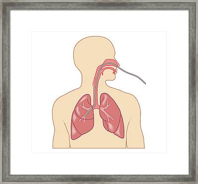 Cross Section Biomedical Illustration Framed Print by Dorling Kindersley