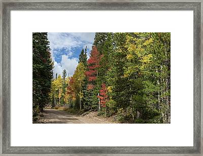 Framed Print featuring the photograph Cruising Colorado by James BO Insogna