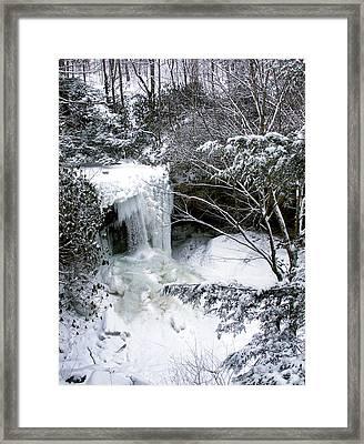 Cucumber In Winter Framed Print