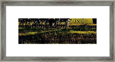 Framed Print featuring the photograph Cultivator At Sunrise by Jerry Sodorff