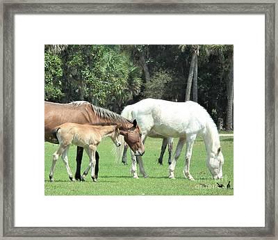 Cumberland Horses Family Portrait Framed Print