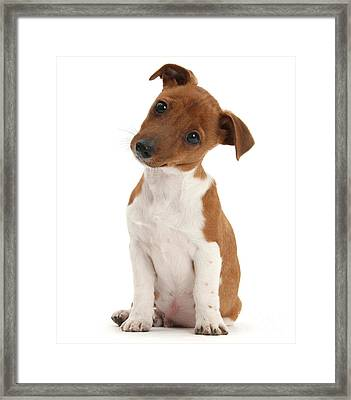 Framed Print featuring the photograph Curious by Warren Photographic