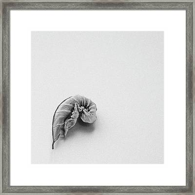 Curled Leaf - Fine Art Photograph Framed Print