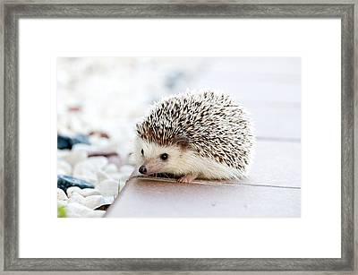 Cute Hedgeog Framed Print