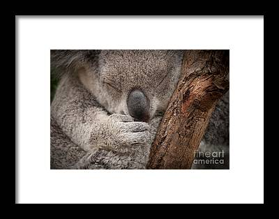 Pouch Framed Prints