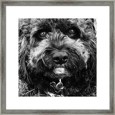 Cutest Dog On The Planet Framed Print