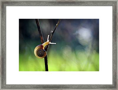 Framed Print featuring the photograph Cutie Pie by Michelle Wermuth