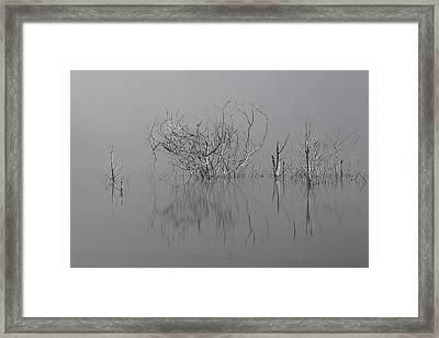 D1093 - Theewaterskloof Trees Framed Print