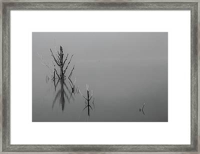 D1096 - Theewaterskloof Trees Framed Print