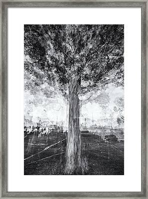 D1651p Framed Print