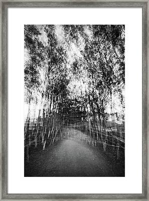 D1797p Framed Print