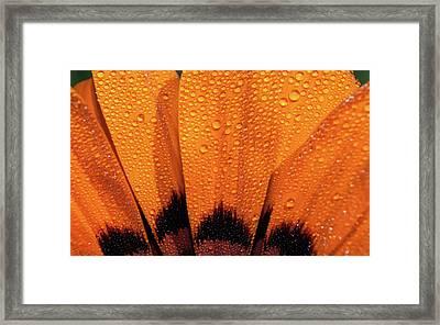 D3453 Framed Print