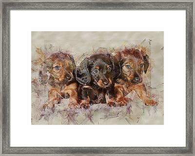 Dachshund Three Puppies Framed Print