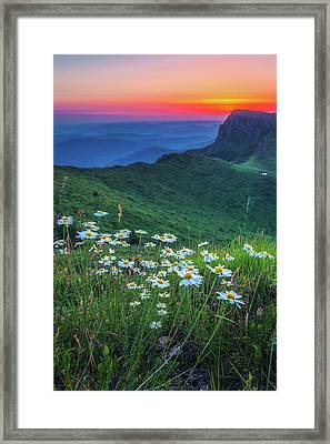 Daisies In The Mountain Framed Print