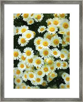 Daisy Crazy For You Framed Print