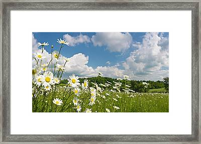 Daisy Meadow Summer Pastoral Framed Print by Fotovoyager