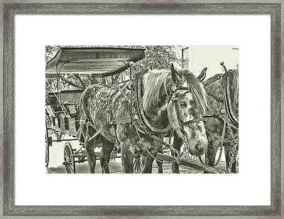Dapple Grey Framed Print