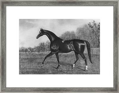 Darley Arabian Framed Print by Hulton Archive
