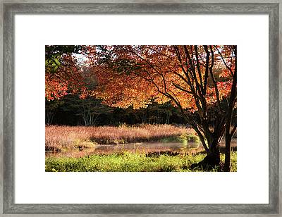 Dawn Lighting Rhode Island Fall Colors Framed Print