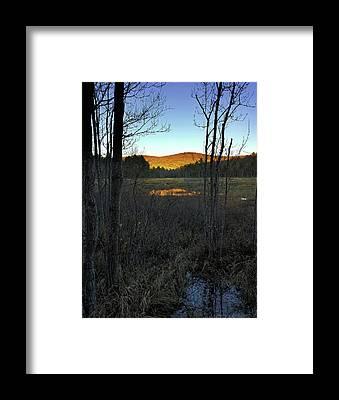 Marsh Grass Framed Prints
